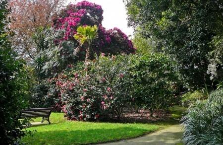 Fox Rosehill Garden