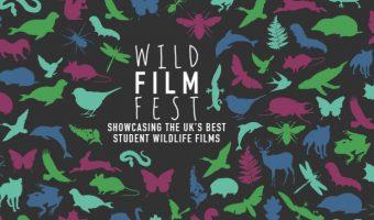 Wild Film Fest